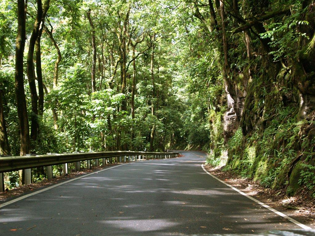 茂宜島熱帶雨林