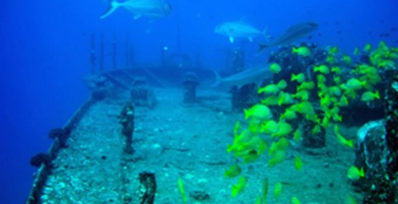 Ohana Hawaii Tour/夏威夷自由行私人導遊 - Atlantis Submarines 夏威夷潛水艇