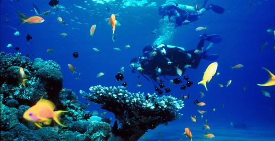 Scuba Diving 潛水