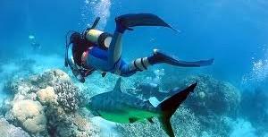 Ohana Hawaii Tour/夏威夷自由行私人導遊 - Scuba Diving 潛水