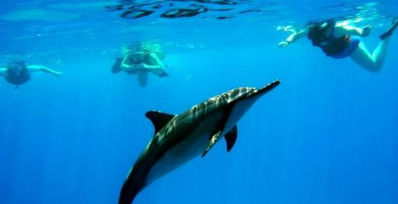 Dolphin Excursions 與海豚共泳